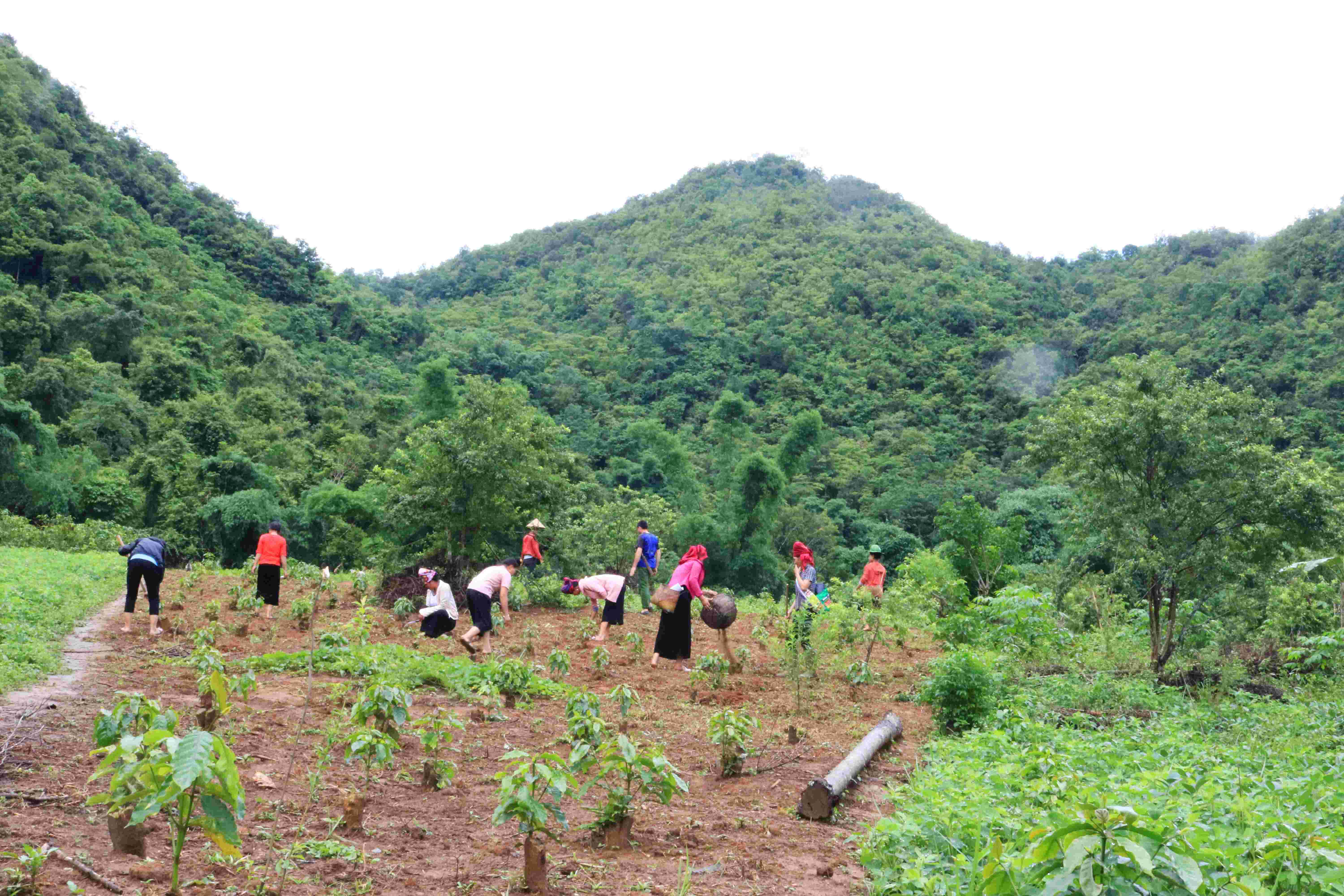 Thai ethnic people are using compost to fertilize the soil in their hill garden-compressed